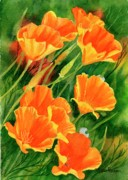 Realistic Watercolor Prints - California Poppies Faces Up Print by Sharon Freeman