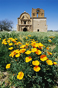 Religions Prints - California Poppies Grow Near Tumacacori Print by Rich Reid