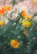 California Poppies Print by Julie Lueders