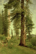 Romanticist Framed Prints - California Redwoods Framed Print by Albert Bierstadt