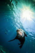 California Sea Lions Photos - California Sea Lion, La Paz, Mexico by Todd Winner