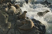 California Sea Lions Photos - California Sea Lions Bask On San Miguel by James A. Sugar