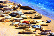 California Sea Lions Prints - California Sunbathers . Harbor Seals Print by Wingsdomain Art and Photography