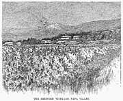 Viticulture Framed Prints - California: Vineyard, 1889 Framed Print by Granger