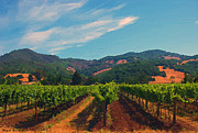 Grapevines Prints - California Vineyard Print by Jerry L Barrett