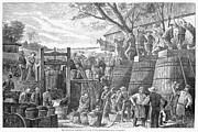 Wine-press Photos - California: Wine Harvest by Granger