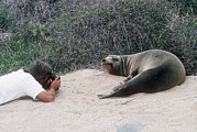 Californian Art - Californian Sea Lion With A Tourist by Georgette Douwma
