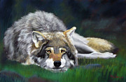 Wolf Pastels Framed Prints - Call it a Day Framed Print by Marcus Moller