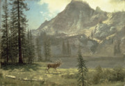Bierstadt Painting Posters - Call of the Wild Poster by Albert Bierstadt
