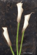 Photographs Painting Originals - Calla Lilies by Alex Rahav