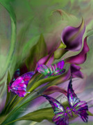 Butterfly Print Posters - Calla Lilies Poster by Carol Cavalaris