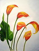 Calla Paintings - Calla Lilies by Carol Sweetwood