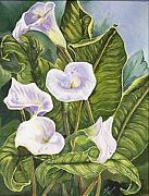 Sue Ervin - Calla Lillies