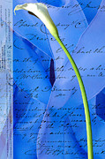 Calla Lilly Mixed Media Posters - Calla Lilly on Blue Ribbon Love Letter Poster by Anahi DeCanio
