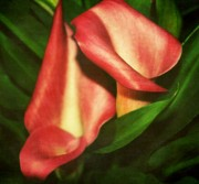 Calla Lilly Metal Prints - Calla Lillys Metal Print by Cathie Tyler