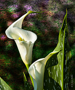 Larry Walker Prints - Calla Lily - P. Bright Print by J Larry Walker