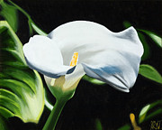 Lilies Paintings - Calla Lily 10 by Sharon Von Ibsch