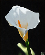 Lilies Paintings - Calla Lily 12 by Sharon Von Ibsch