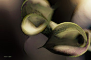 Calla Lily Digital Art Posters - Calla Lily Abstract Poster by Jayne Logan Intveld