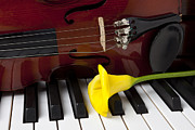 Keyboards Prints - Calla lily and violin on piano Print by Garry Gay