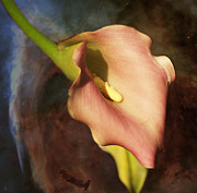 Barbara Middleton - Calla Lily