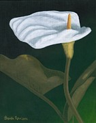 Calla Lilly Originals - Calla Lily by Brenda Rowe