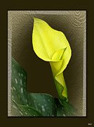 Vision Mixed Media - Calla Lily by Debra     Vatalaro