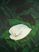 Judy Swerlick - Calla Lily in the Garden...