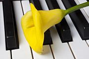 Composing Posters - Calla lily on keyboard Poster by Garry Gay