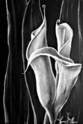 Calla Lilly Drawings Prints - Callas Lilies Trio Print by Lonnie Niver