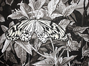 Muted Drawings Prints - Callaway Paper Kite Butterfly Print by Beth Parrish