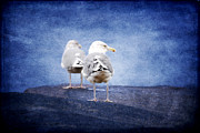 Sea Gulls Prints - Calm at the Lighthouse Print by Sabine Jacobs