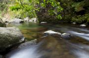 Jenna Prints - Calm Iao River Print by Jenna Szerlag