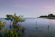 Biscayne Bay Posters - Calm Tropical Dusk Poster by Matt Tilghman