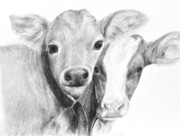 Cows Drawings Posters - Calves Poster by Meagan  Visser