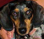 Dachshund Puppy Digital Art Framed Prints - Camden Framed Print by Debrosi