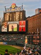 Baltimore Orioles Prints - Camden Yards Print by Amber Bobbitt
