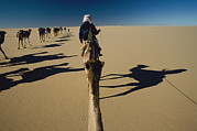 Sahara Sunlight Posters - Camel Caravan And Their Shadows Poster by Carsten Peter