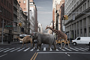 Crosswalk Framed Prints - Camel, Elephant And Giraffe Crossing City Street Framed Print by Thomas Jackson