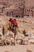 Camel In Front Of The Royal Tombs In Petra Print by Martin Child