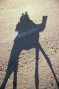 Camel Photos - Camel Shadow by Gloria & Richard Maschmeyer - Printscapes
