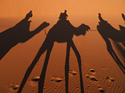 Animals On Train Framed Prints - Camel Shadows In Sahara Desert Framed Print by Win Initiative