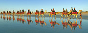 Camel Photos - Camel Train by Raoul Madden