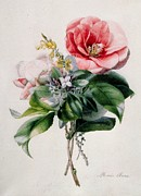 Camellia Paintings - Camellia and Broom by Marie-Anne