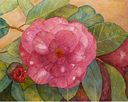 Camellia Paintings - Camellia by Stella Schaefer