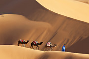 Animals On Train Framed Prints - Camels & Dunes, Erg Chebbi, Sahara Desert, Morocco Framed Print by Peter Adams