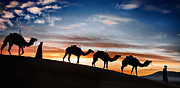 Sahara Prints - Camels - 2 Print by Okan YILMAZ