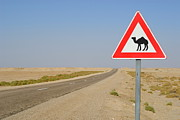 Camel Photos - Camels crossing road sign by Sami Sarkis