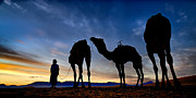Sahara Prints - Camels  Print by Okan YILMAZ