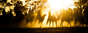 Camel Photos - Camels Walking Along Dry River Bed by Brooke Whatnall